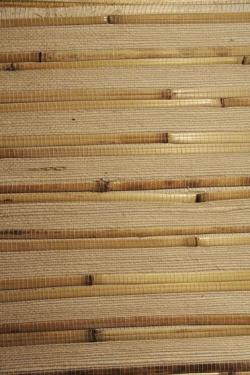 Бамбук-тросник