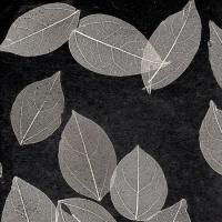 Листья «Прима Ноче»