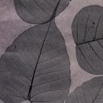 Листья «Прима Ахумадо»