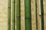Стволы зеленые